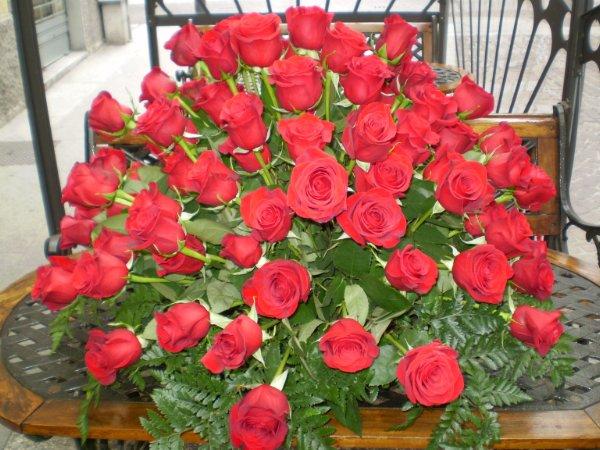 Estremamente ROSE | Gipsy Fiori: - Fiori Alessandria – consegna fiori a  ZE54